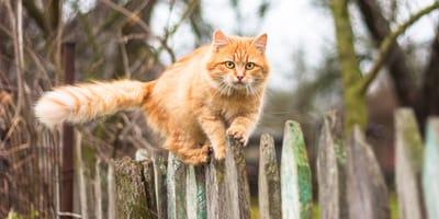 Czy kot zawsze spada na cztery łapy?