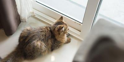 Czy koty odczuwają tęsknotę i zauważają naszą nieobecność?