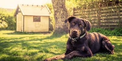 Señales de embarazo en perros: ¿cómo detectar si tu perrita está esperando?