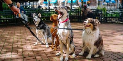 W Białymstoku mieszkańcy wyprowadzili na spacer  ponad sto psów ze schronisk