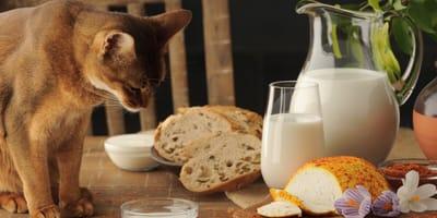 Cat sitting next to bread