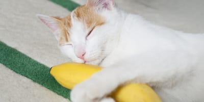 Cat hugging a banana