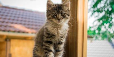 Kitten in front of a window