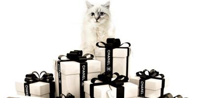 Choupette cat mourns dead fashion designer Lagerfeld.