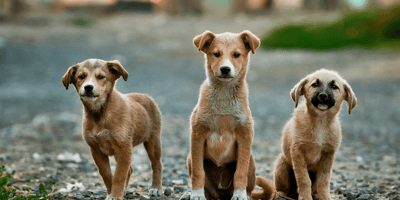 Three small puppies in the street