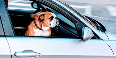 How to travel with a dog