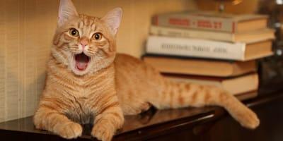 libros sobre gatos
