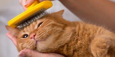 Kämmen & Bürsten: Alles zur Fellpflege bei Katzen