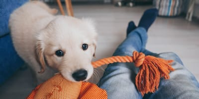 ¿Cuándo hay que empezar a educar a un cachorro?