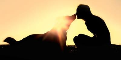perro humana atardecer inspiracion