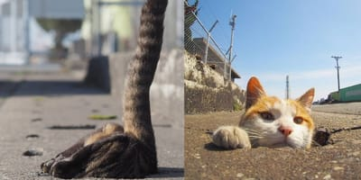Japanese photographer captures stray cats having the best time
