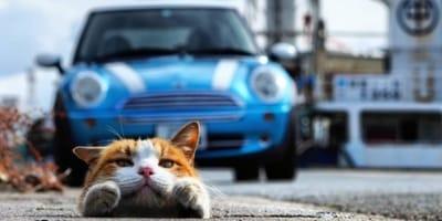 Japoński fotograf odkrył grupę bezdomnych kotów - zobaczcie ich niesamowite zdjęcia
