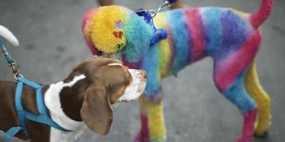 Zwei Hunde, einer mit bunt gefärbtem Fell