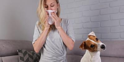 Alergia na psa: jakie są objawy i jakie leczenie podjąć?