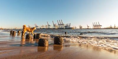 Hund an der Elbe in Hamburg