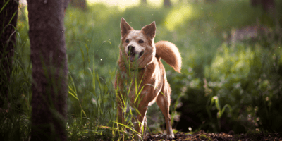 The symptoms of ticks on dogs