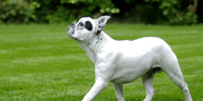 Everything you need to know about elbow dysplasia in dogs