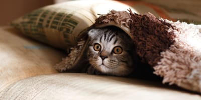 20 fun facts about cats (you didn't even know!)
