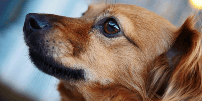 10 foods which are poisonous to dogs