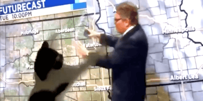A video of a cat attacking a weatherman on TV has gone viral.