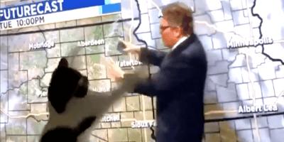'Psychokinetic' cat stalks Dakota weatherman in viral video