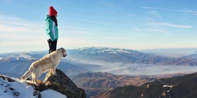 Silvester mit Hund: Reiseziele für einen ruhigen Jahreswechsel ohne Feuerwerk