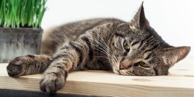 Zatrucie pokarmowe u kota - objawy i leczenie