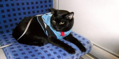 Katze im Regionalexpress-Zug