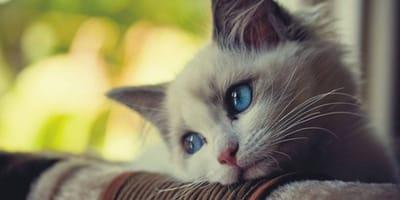 Rothaarige Katze schaut einsam zum Fenster hinaus