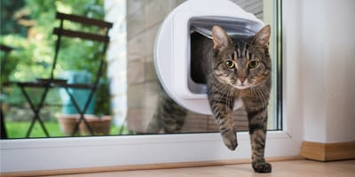Jak wybrać drzwiczki dla kota?