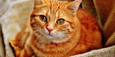 5 cosas que harán creer a tu gato que no lo amas