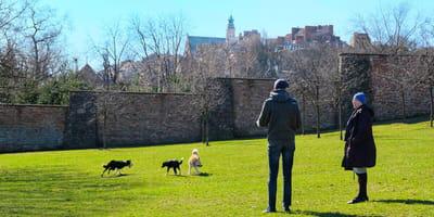 Wycieczka z psem: co warto zobaczyć w największych miastach w Polsce!