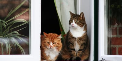 Nicht mehr allein: Wenn eine zweite Katze einzieht