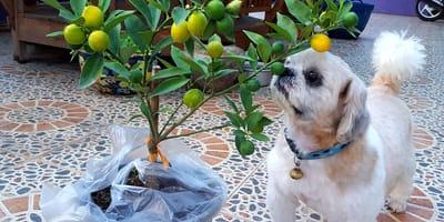 Poznaj zapachy, których Twój pies bardzo nie lubi!