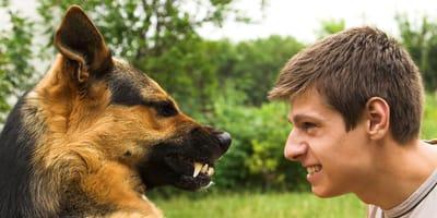 personalidad perro