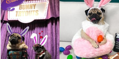 Your pet could be the star of the new Cadbury Easter advert