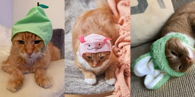 Urban Outfitters cat hats are adorable