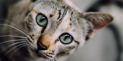 Owner's personality affects cat behaviour and welfare