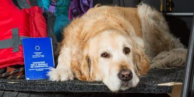 Hund mit Koffer und Heimtierausweis