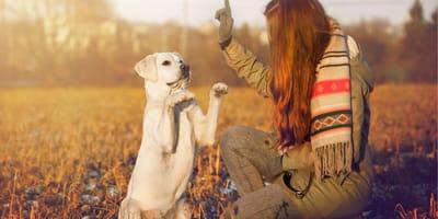 Sztuczki psa