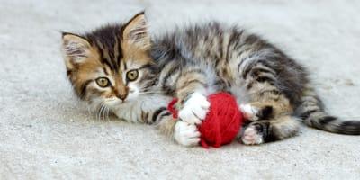 Spaß pur: Sechs geniale Spielideen für Babykatzen
