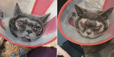 Chinese pet owner puts her cat through surgery