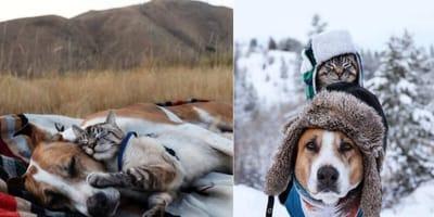 due foto di un gatto che sta su un cane