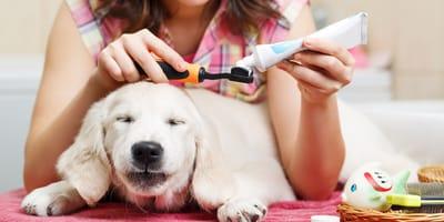 Kamień nazębny u psa – zapobieganie i domowe sposoby na usuwanie