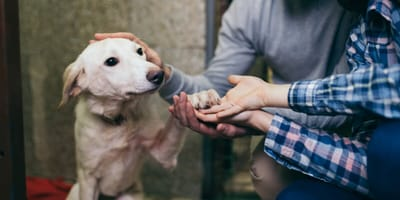 adoptar perros pagar menos impuestos