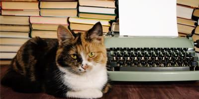 Kot pisarza