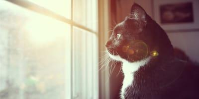 kot sam w domu