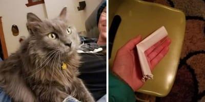 Kot wrócił do domu z nietypową wiadomością przywiązaną do obroży
