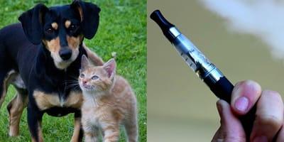 Pies, kot i e-papieros