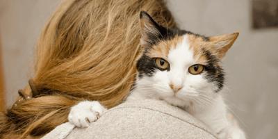 Quali sono le migliori razze di gatti docili da appartamento?